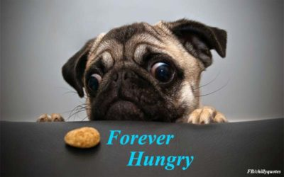 hungry forever
