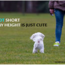 i am not short